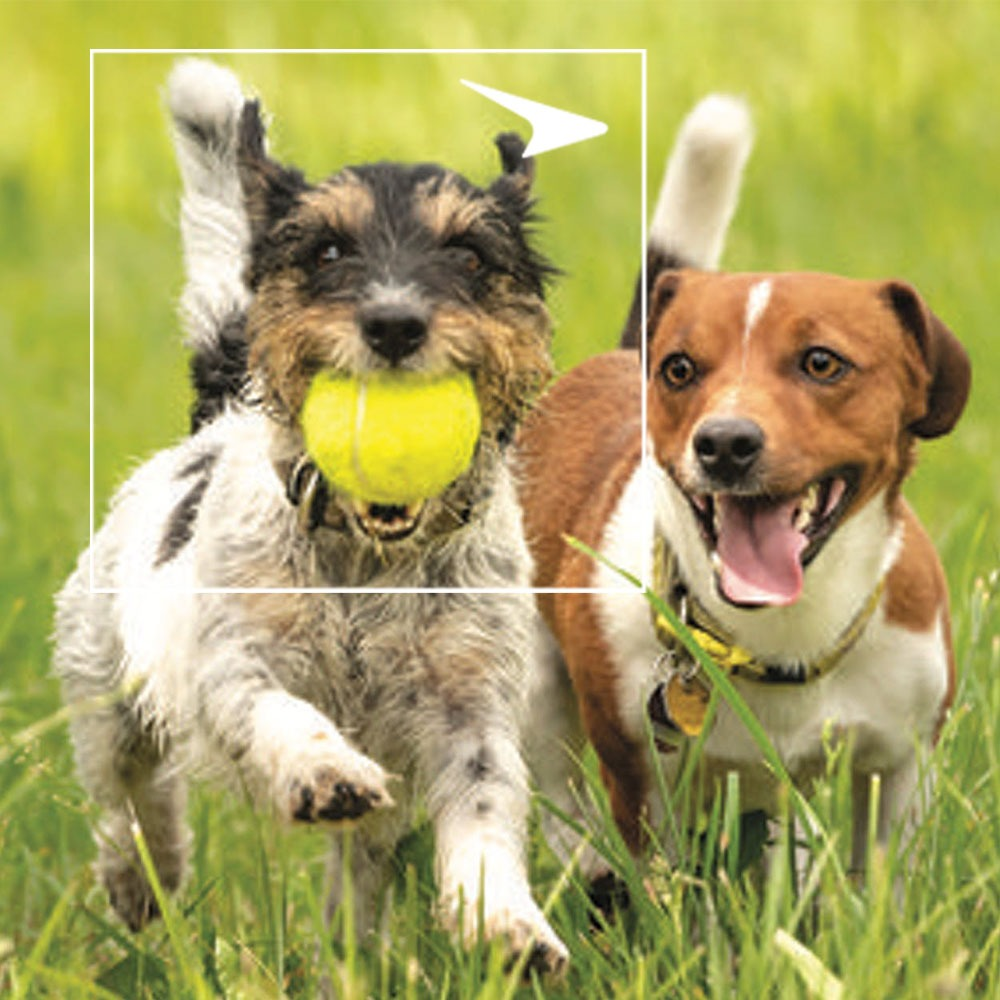 Two dogs running with tennis ball in grass